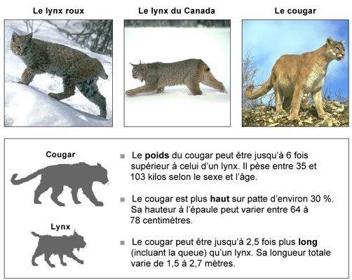 Site De Rencontre Femme Cougar à Nantes (44)