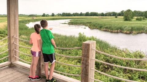 Urgent besoin d'intervention au marais de Montmagny