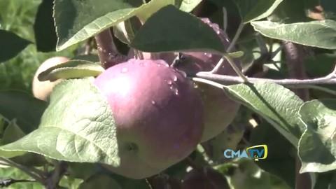 La Fête de la pomme à Cap Saint Ignace : 35 ans ça se fête en grand