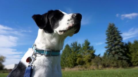 Projet de parc à chien à Montmagny : La Ville dévoile les résultats de son sondage