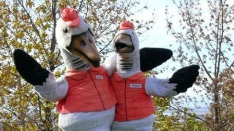 Le Festival de l'Oie blanche met en vente deux produits fromagers en collaboration avec la COOP IGA